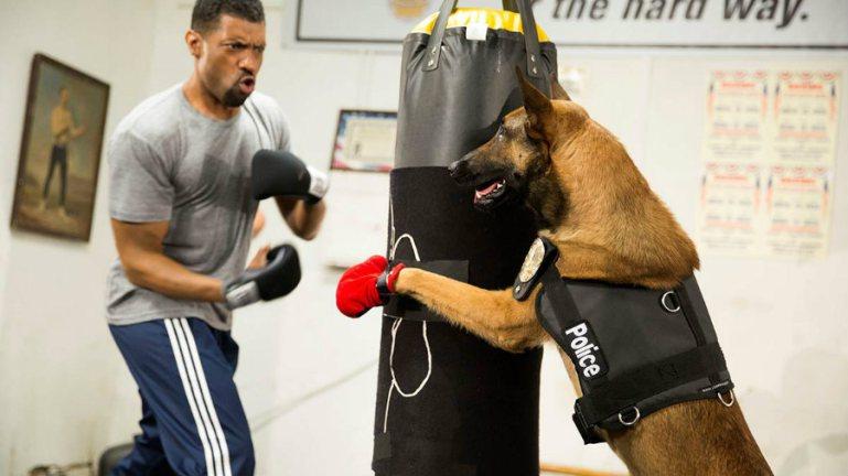 Un chien, qui tient un sac de boxe. Normal.
