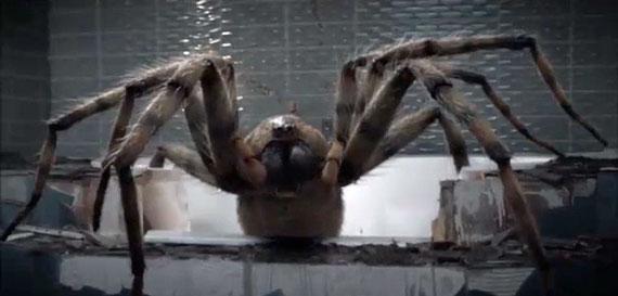 Ouhloulou une araignée !
